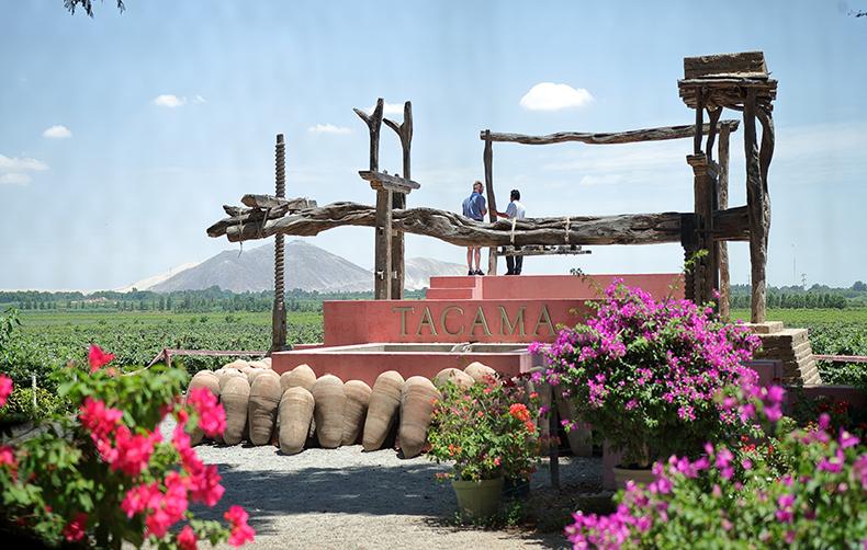 Viña Tacama: Experiencia vivencial enoturística