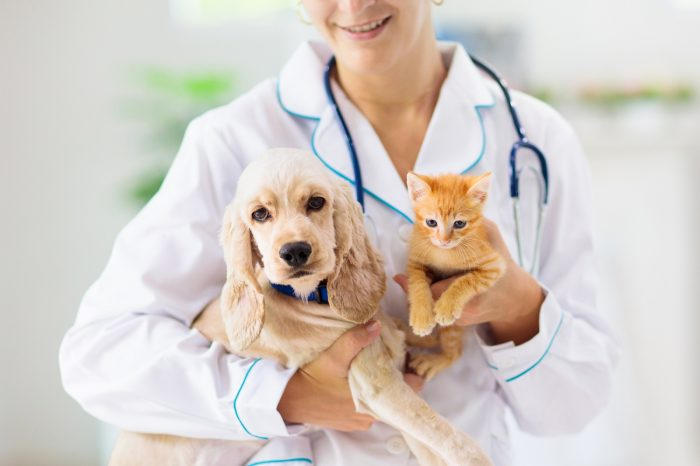 Salud mental de las mascotas: ¿Cómo les afecta el aislamiento social?